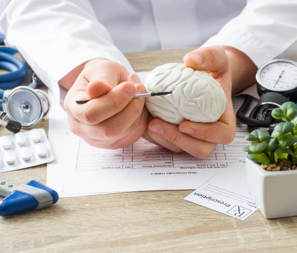 Lekarz pokazuje strukturę na modelu mózgu